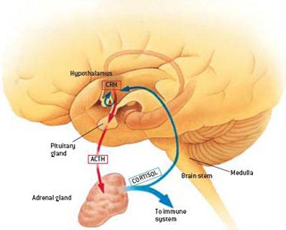 encephalitis-viral-5049_3